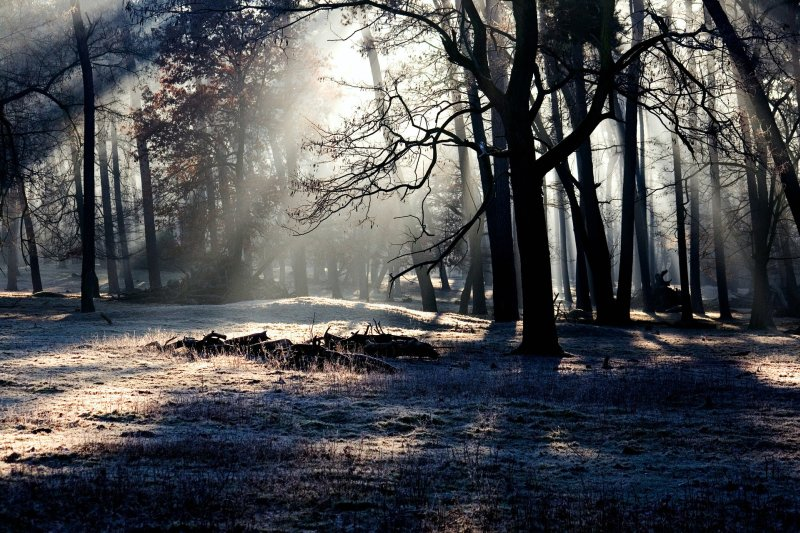 light streams in through the canopy of leafless trees in a winter forest